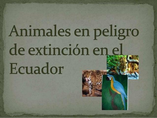 lÍCLlzl)()l{  El Ecuador es un país con mucha flotar y fauna pero lamentablemente los ecuatorianos estamos acabado con par...