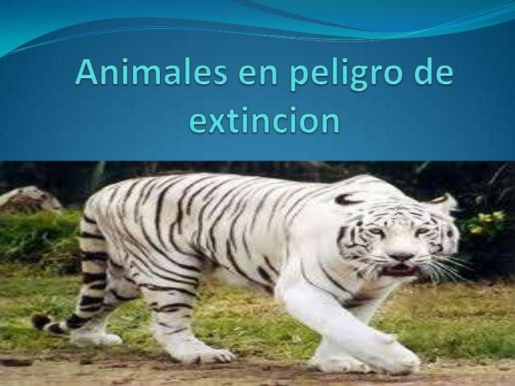 Animales en peligro de extincion<br />