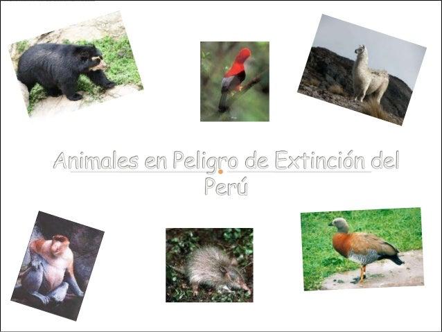  Si bien es cierto, que en los últimos tiempos muchas especies de animales han desaparecido por diferentes causas, como e...