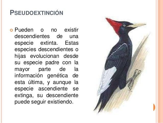 Animales en peligro de extincion por diego beltr n for Pececillo nuevo de cualquier especie