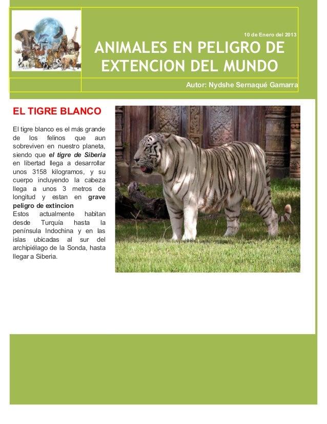 10 de Enero del 2013                             ANIMALES EN PELIGRO DE                              EXTENCION DEL MUNDO  ...