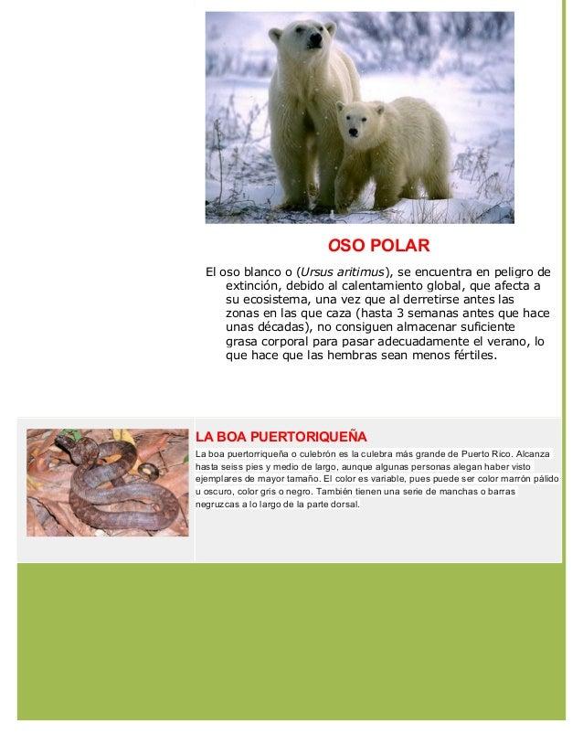 Animales en peligro de extincion  - nydshe sernaque gamarra Slide 2