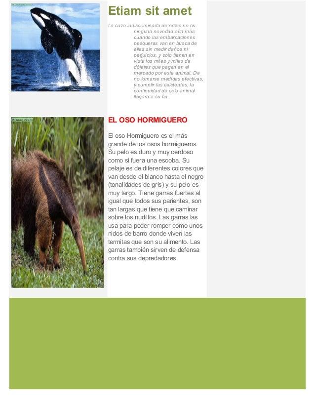 Animales en peligro de extincion  - nydshe sernaque gamarra Slide 3