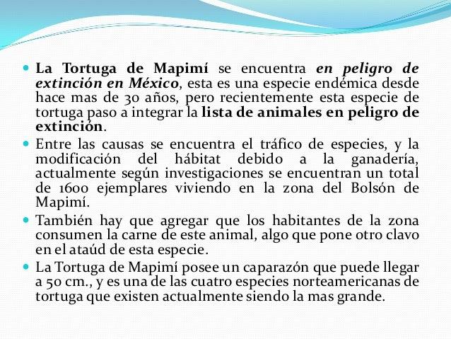  El manatí es una especie que se encuentra en critico peligro de  extinción, durante varios siglos alimento la imaginació...