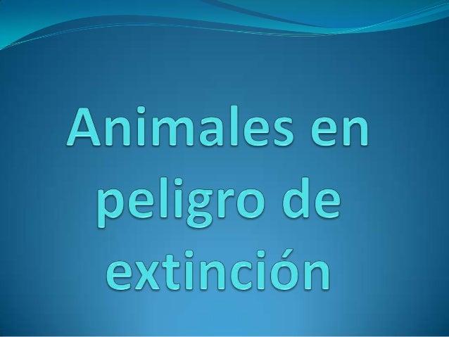Las especies animales en peligro de extinción se clasifican de la siguiente forma:  Extinto: una especie animal está exti...