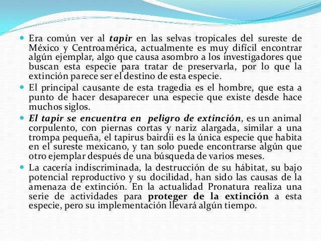  La Tortuga de Mapimí se encuentra en peligro de  extinción en México, esta es una especie endémica desde hace mas de 30 ...