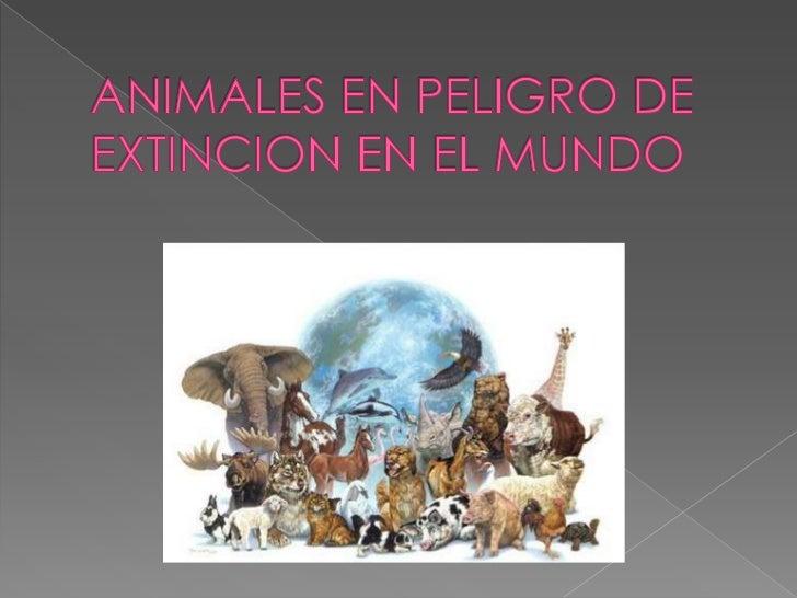 ANIMALES EN PELIGRO DE EXTINCION EN EL MUNDO<br />