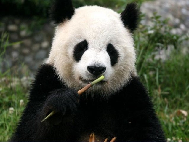 En Peligro De Extinción: Animales En Peligro Extincion