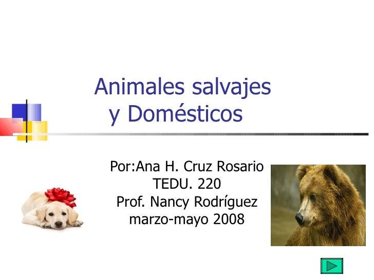 Animales salvajes    y Domésticos Por:Ana H. Cruz Rosario TEDU. 220 Prof. Nancy Rodríguez marzo-mayo 2008