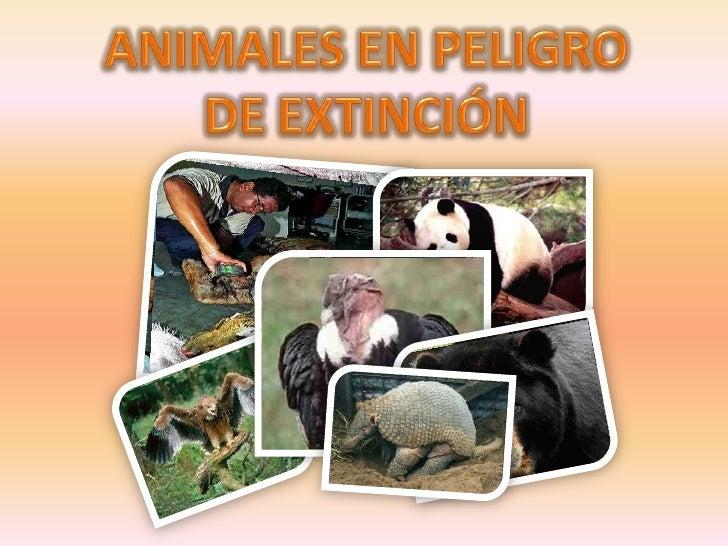 ANIMALES EN PELIGRODE EXTINCIÓN<br />