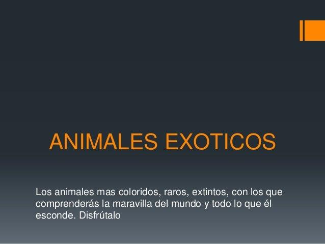 ANIMALES EXOTICOS Los animales mas coloridos, raros, extintos, con los que comprenderás la maravilla del mundo y todo lo q...