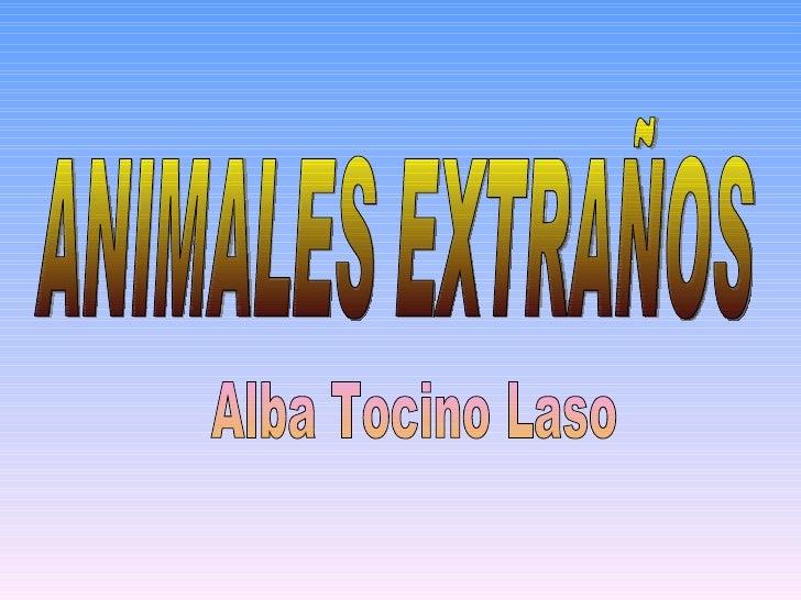 ANIMALES EXTRAÑOS Alba Tocino Laso
