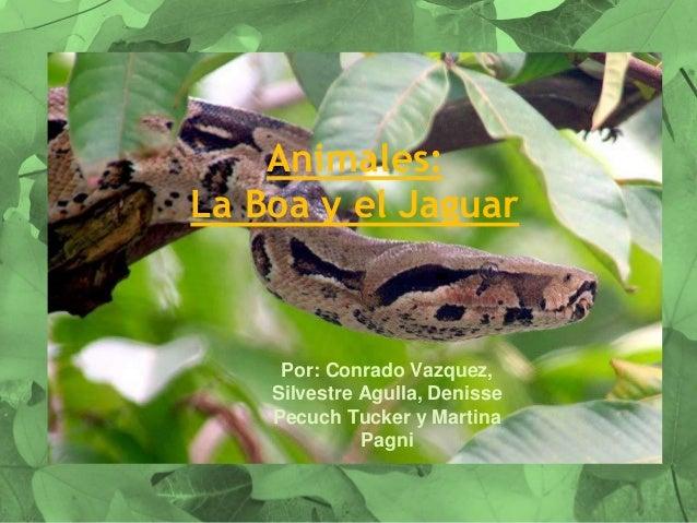 Animales: La Boa y el Jaguar Por: Conrado Vazquez, Silvestre Agulla, Denisse Pecuch Tucker y Martina Pagni