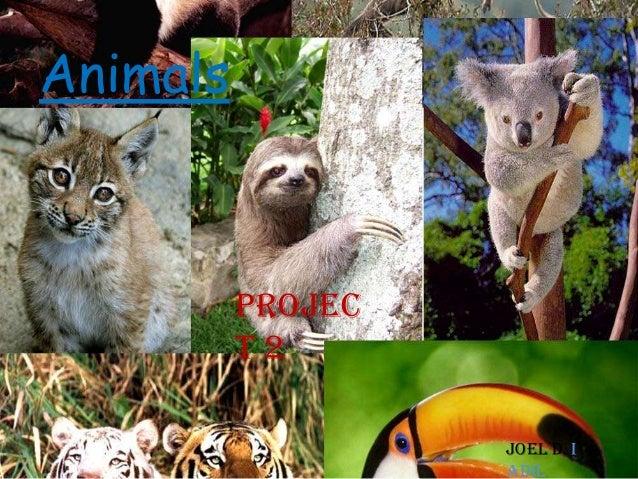 Animals  Projec t2 Joel D i Adil