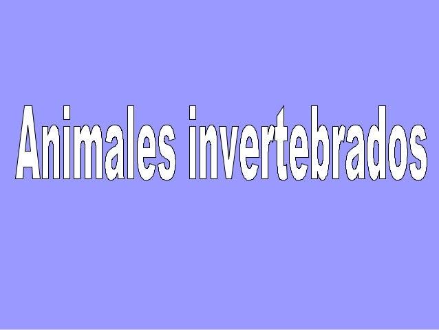 ANIMALES INVERTEBRADOS • No tienen esqueleto interno ni columna vertebral. • Todos son ovíparos, se reproducen por huevos....