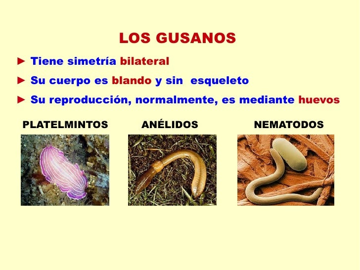 Como se ve los parásitos en kale