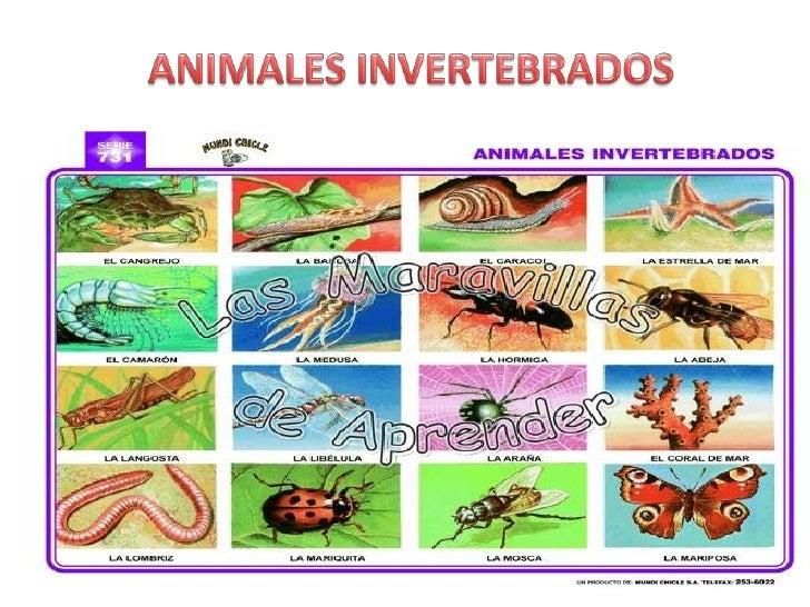 ANIMALES INVERTEBRADOS<br />