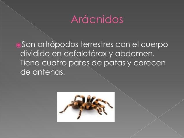 Artropodos reproduccion asexual artificial