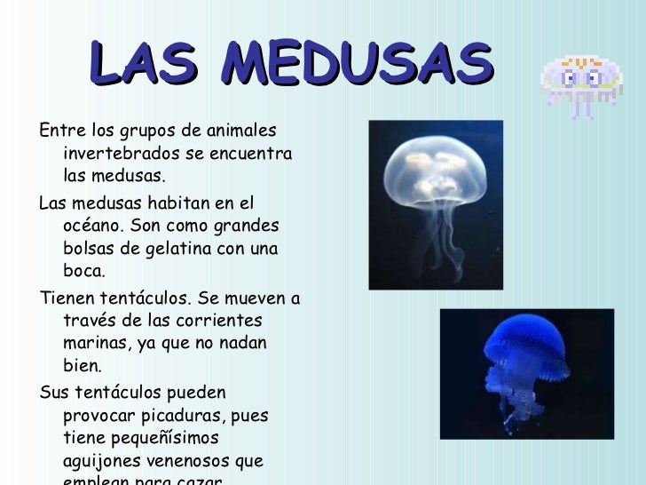 Animales invertebrados ud 5 - Como se alimentan las medusas ...