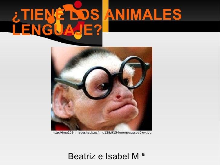 ¿TIENE LOS ANIMALES LENGUAJE? Beatriz e Isabel M ª http://img129.imageshack.us/img129/9154/monozppsoe0wy.jpg