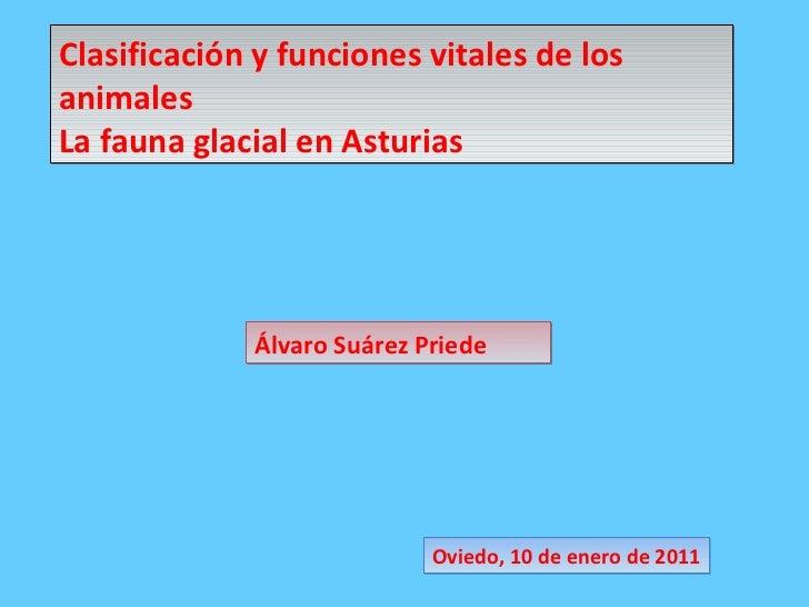 Clasificación y funciones vitales de los animales La fauna glacial en Asturias Oviedo, 10 de enero de 2011 Álvaro Suárez P...