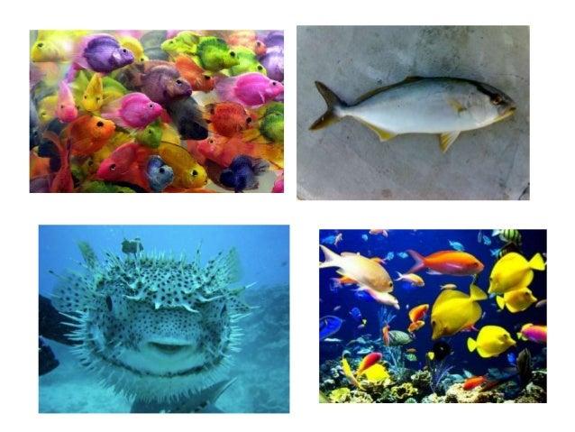 Animales marinos kinder