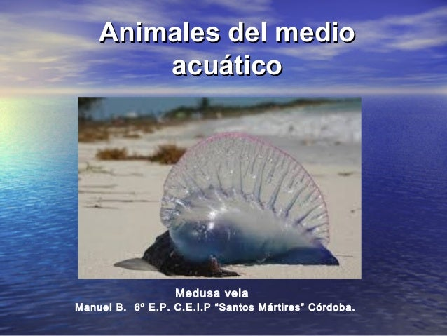 "Animales del medioAnimales del medio acuáticoacuático Manuel B. 6º E.P. C.E.I.P ""Santos Mártires"" Córdoba. Medusa vela"
