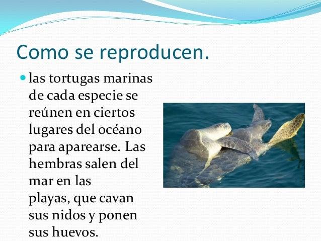 Animales marinos en el mar caribe - Como se aparean los elefantes ...