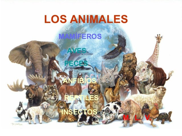 LOS ANIMALES MAMÍFEROS AVES PECES ANFIBIOS REPTILES INSECTOS M. L. V.