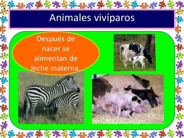 Clases De Animales Según Su Nacimiento