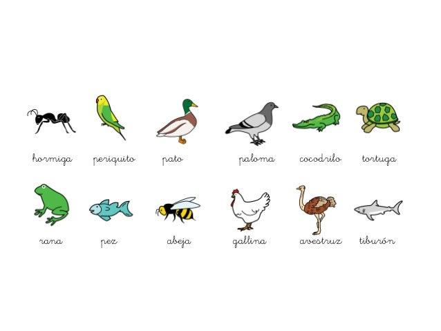 Animales Oviparos Y Viviparos Viviparo Y Oviparo Dibujos Para