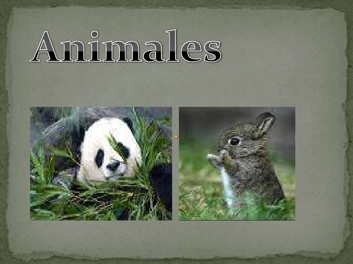 Animales<br />