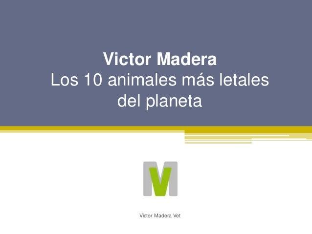 Victor Madera Los 10 animales m�s letales del planeta Victor Madera Vet