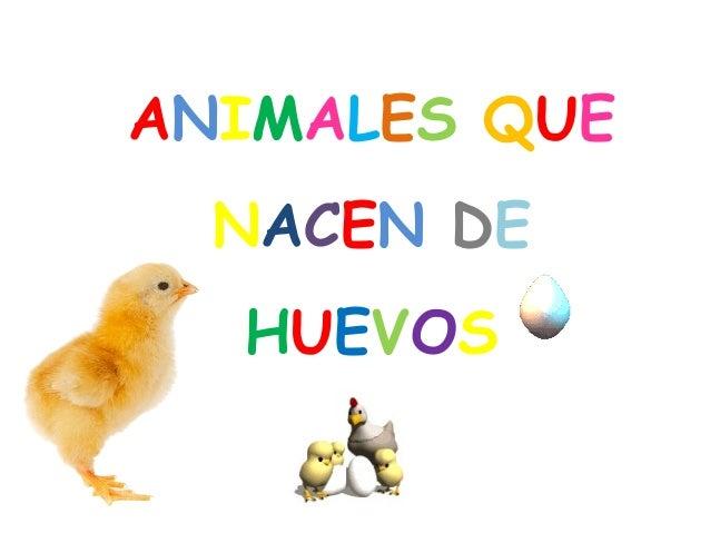 ANIMALES QUE  NACEN DE  HUEVOS