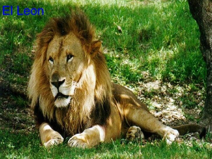 Animales: Animales Salvajes