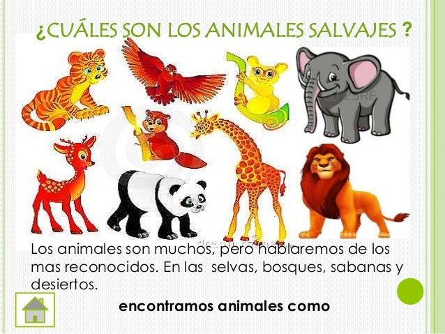 Animales salvajes for Cuales son los arboles perennes