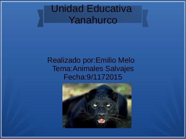 Unidad Educativa Yanahurco Realizado por:Emilio Melo Tema:Animales Salvajes Fecha:9/1172015