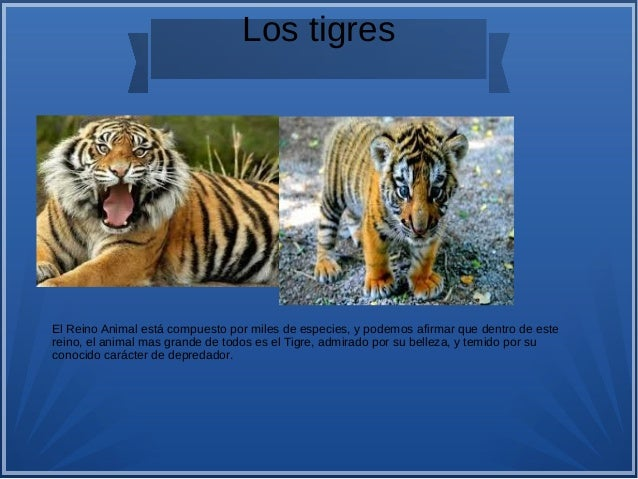 Animales salvajes Slide 2