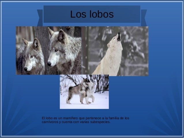 Animales salvajes Slide 3