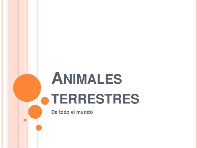 ANIMALES TERRESTRES De todo el mundo