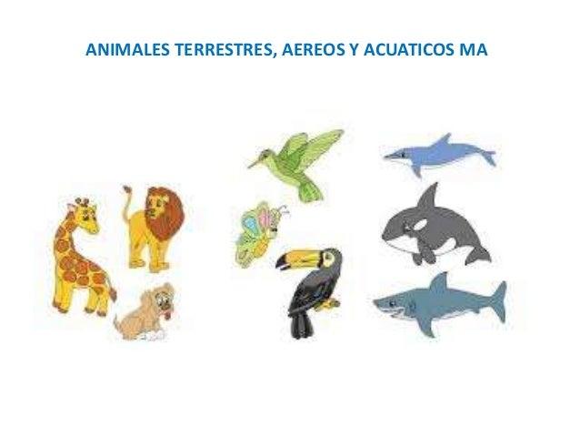 animales terrestres - photo #45