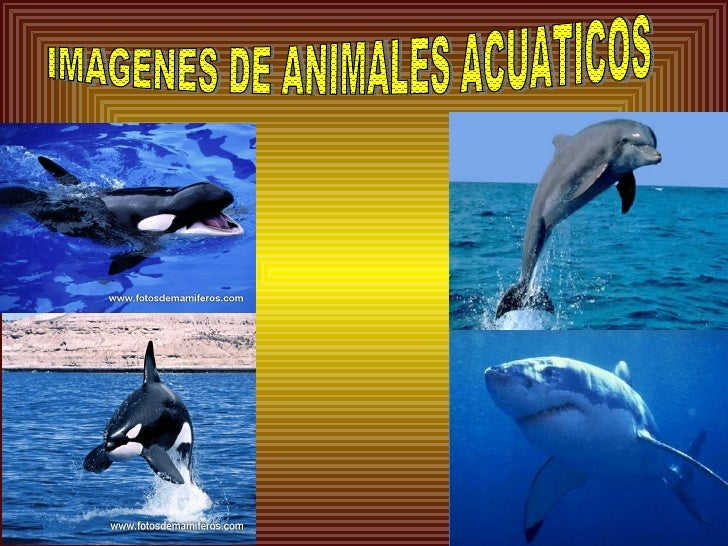 animales terrestres - photo #42