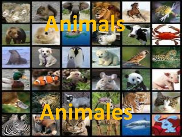 Animals Animals Animales