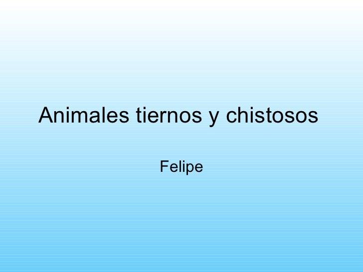 Animales tiernos y chistosos  Felipe