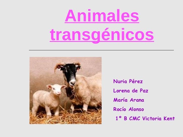 Animales transgénicos Nuria Pérez Lorena de Paz María Arana Rocío Alonso 1º B CMC Victoria Kent