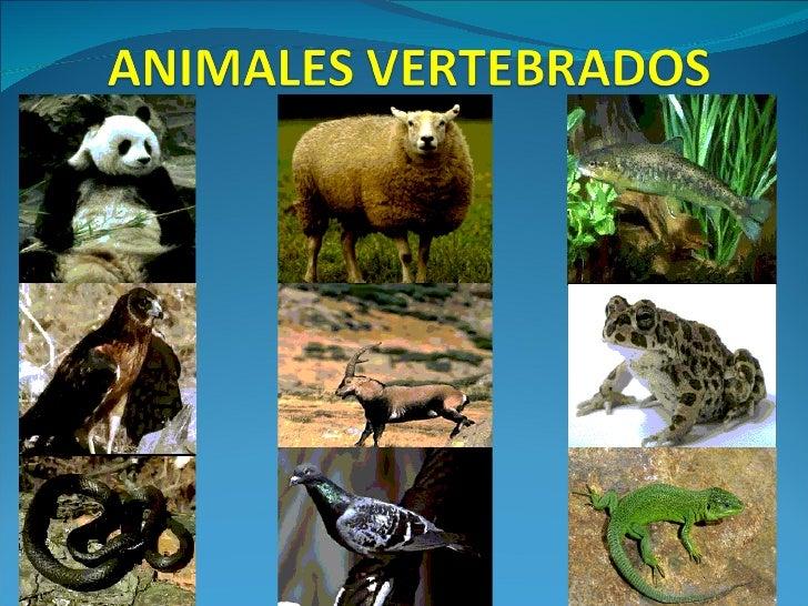Resultado de imagen de ANIMALES VERTEBRADOS