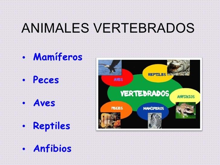 ANIMALES VERTEBRADOS• Mamíferos• Peces• Aves• Reptiles• Anfibios