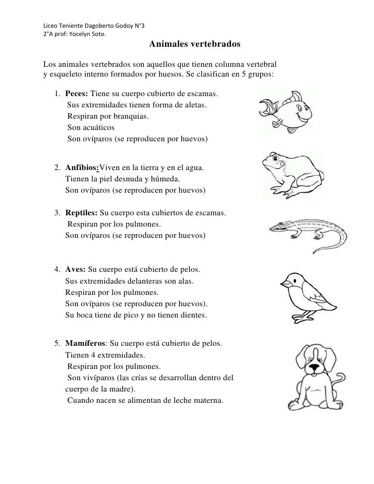 Liceo Teniente Dagoberto Godoy N°32°A prof: Yocelyn Soto.                                     Animales vertebradosLos anim...