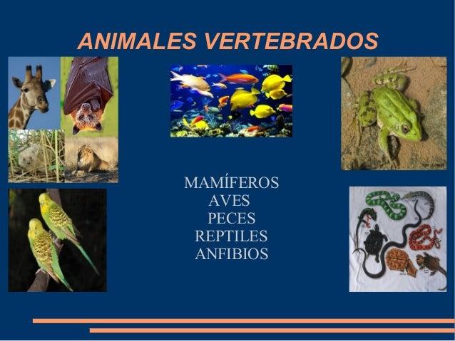 ANIMALES VERTEBRADOS MAMÍFEROS AVES PECES REPTILES ANFIBIOS