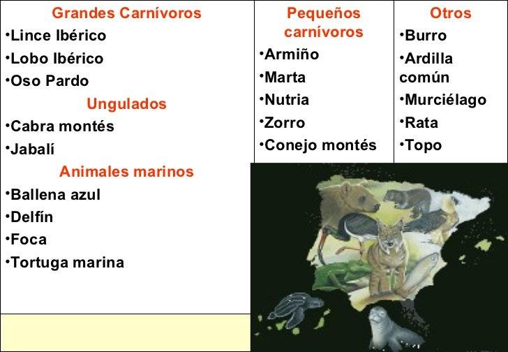 <ul><li>Otros </li></ul><ul><li>Burro </li></ul><ul><li>Ardilla común </li></ul><ul><li>Murciélago </li></ul><ul><li>Rata ...